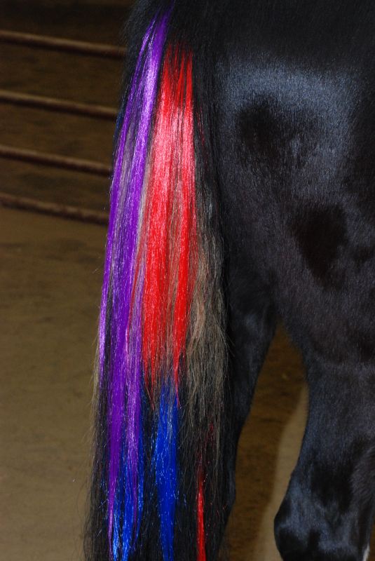 Photo Gallery Colorful Manes And Tails